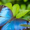 Butterfly2k17_2_20170603_213