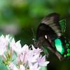 Butterfly2k17_2_20170603_133