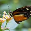 Butterfly2k17_2_20170603_175