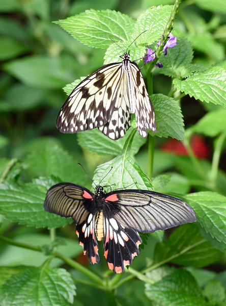 Butterfly_20150824_1543_112