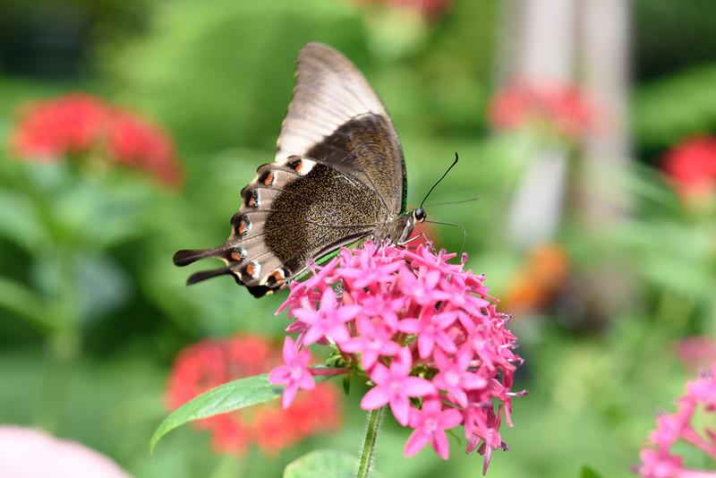 Butterfly_20150824_1548_134