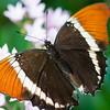 Butterfly2k17_2_20170603_151