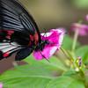 Butterfly2k17_2_20170603_186