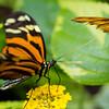 Butterfly2k17_2_20170603_100