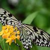 Butterfly_20150824_1537_100