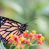 Butterfly_2k16_20160814_116_pp1