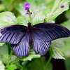 Butterfly_20150824_1532_075