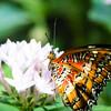 Butterfly2k17_20170520_069