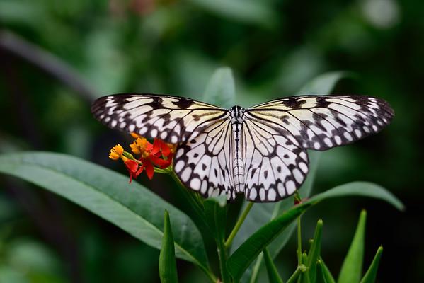 Butterfly_20150824_1518_033
