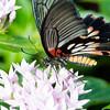 Butterfly2k17_20170520_132