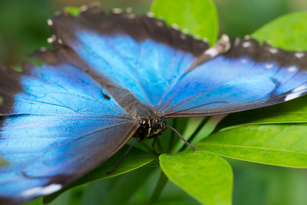Butterfly2k17_2_20170603_217