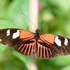 Butterfly_20150907_1546_228