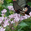 Butterfly2k17_20170520_149
