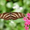 Butterfly_20150907_1543_223