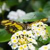 Butterfly2k17_20170520_051
