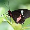 Butterfly_20150824_1528_062