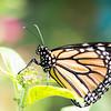 Butterfly_2k16_20160814_030_pp_kk1