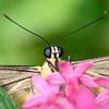 Butterfly_20150907_1529_185