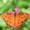 Butterfly_20150907_1541_219