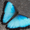 Butterfly2k17_2_20170603_148
