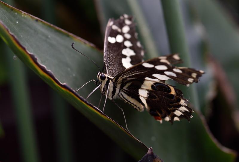Butterfly_20150824_1519_038_crop