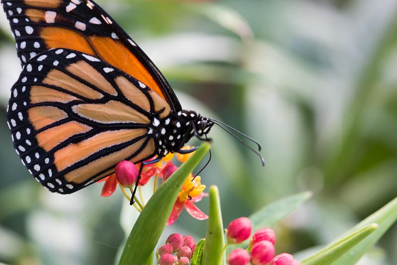 Butterfly_2k16_20160814_087_pp_kk1