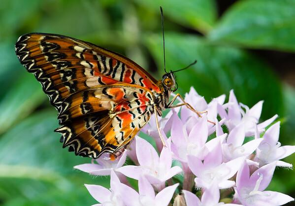 Butterfly2k17_20170520_093