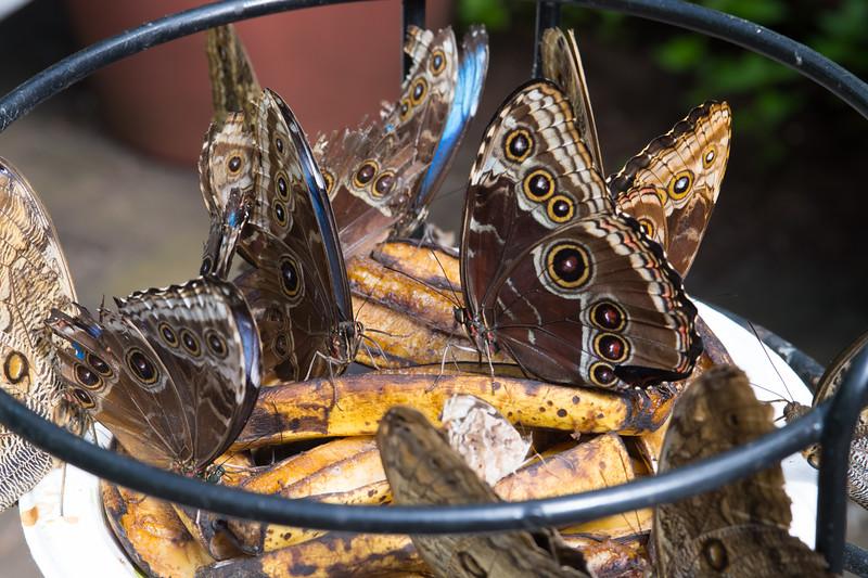 Butterfly2k17_20170520_087