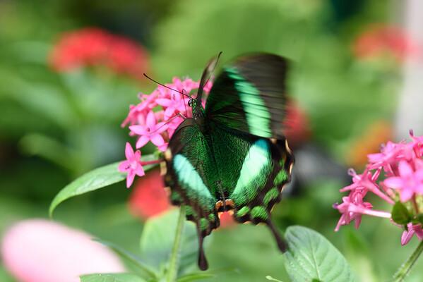 Butterfly_20150824_1548_132