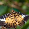 Butterfly2k17_20170520_081