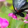 Butterfly2k17_2_20170603_193