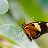 Butterfly2k17_2_20170603_143