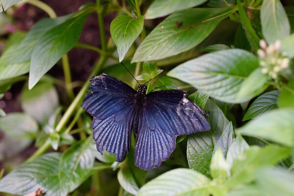 Butterfly_20150907_1531_187