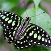 Butterfly2k17_2_20170603_055