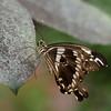 Butterfly_20150824_1539_106