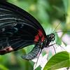 Butterfly2k17_20170520_067