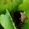 Butterfly_20150824_1517_026