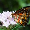 Butterfly2k17_20170520_074