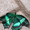 Butterfly2k17_2_20170603_223