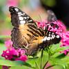 Butterfly_20150824_1551_138_pp1