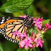 Butterfly_2k16_20160814_062_pp