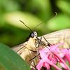 Butterfly_20150907_1527_171