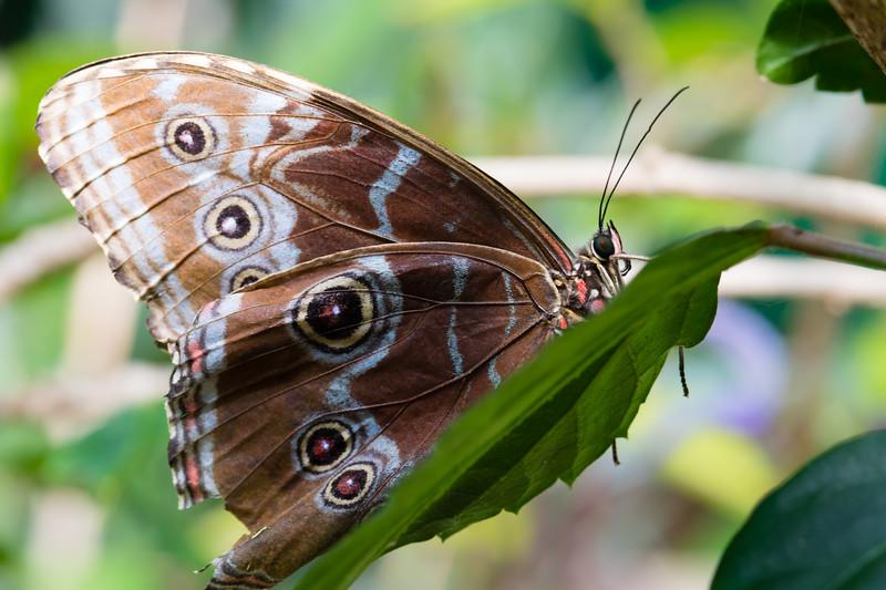 Butterfly2k17_20170520_117