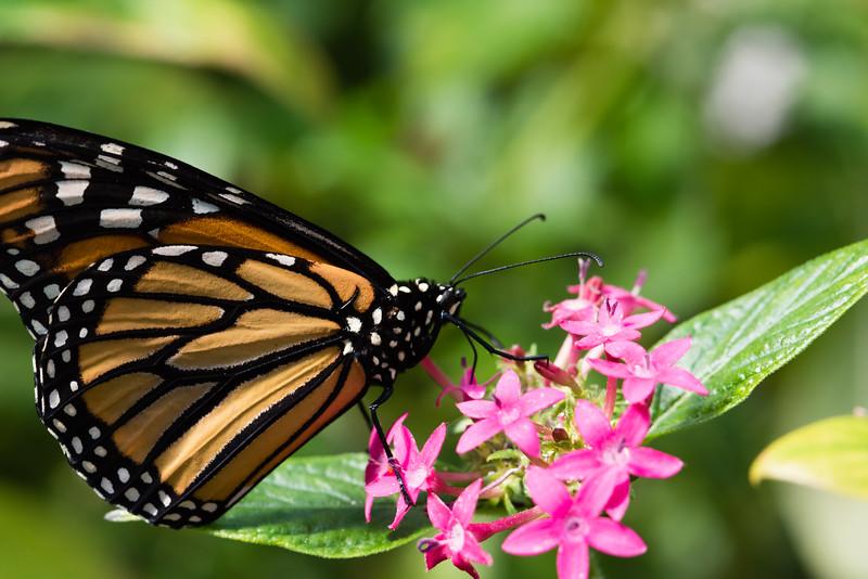 Butterfly_2k16_20160814_067_pp_kk1