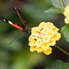 Butterfly_2k16_20160814_111_pp1