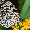 Butterfly_20150907_1554_246_pp1