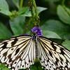 Butterfly_20150907_1520_146