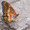 Butterfly2k17_20170520_122