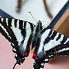 Butterfly2k17_20170520_112