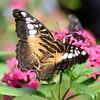 Butterfly_20150824_1551_138